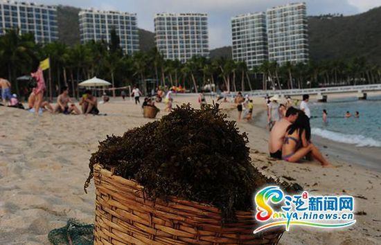 """游人在遭海藻""""入侵""""的小东海海滩上活动。(三亚新闻网记者"""