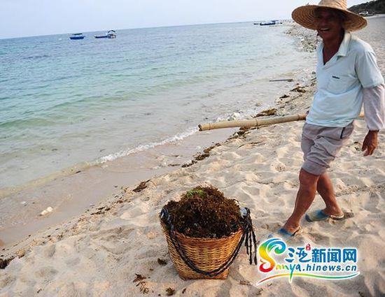 环卫工人正在清理海滩上的海藻。三亚新闻网记者