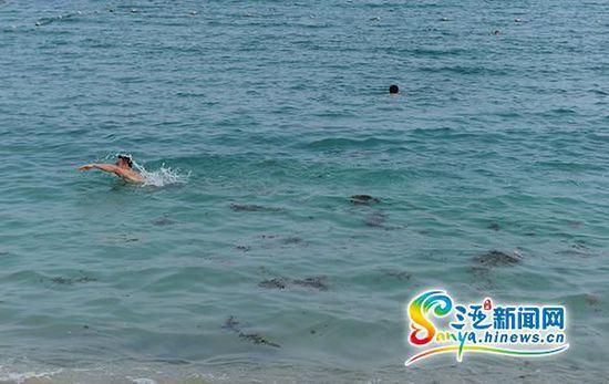 """游人在被海藻""""入侵""""的小东海游泳。(三亚新闻网记者"""