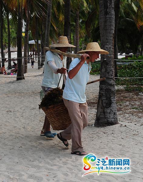 环卫工人在清理海藻。(三亚新闻网记者