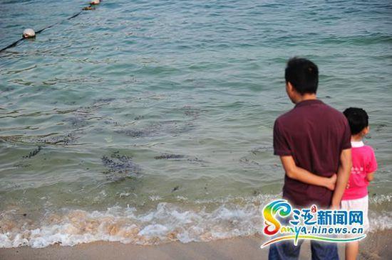 """游人在观看""""入侵""""的海藻。(三亚新闻网记者"""