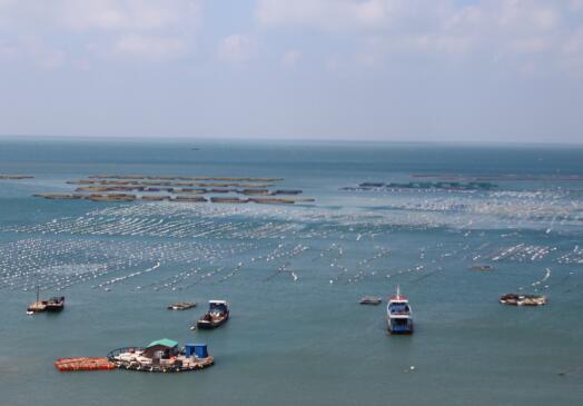 """鱼虾贝藻的""""安乐窝"""" 探访南麂列岛海洋牧场"""