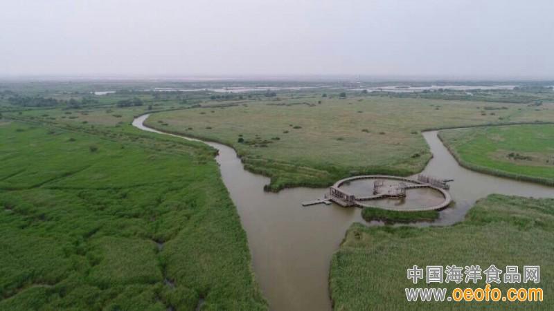 中国海洋工程咨询协会名誉会长孙志辉一行调研东营市湿地保护与管理工作(图)