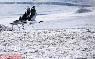 【生态大观】鸟类精彩瞬间集粹 撰文、摄影/宋林继