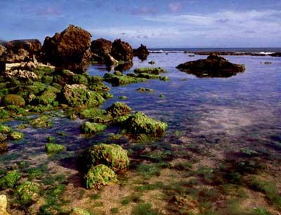 絢麗多彩的海洋植物圖片