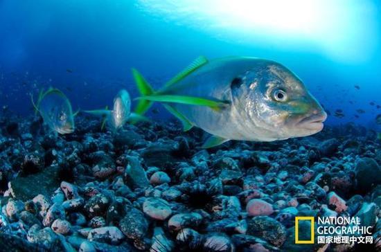 智利创建美洲最大海洋保护区