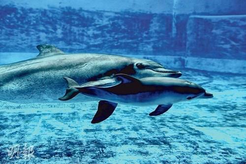 海洋公园添新丁 树懒、海豚生宝宝(图)