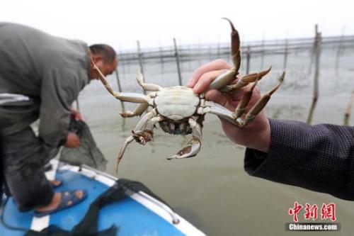 资料图:螃蟹