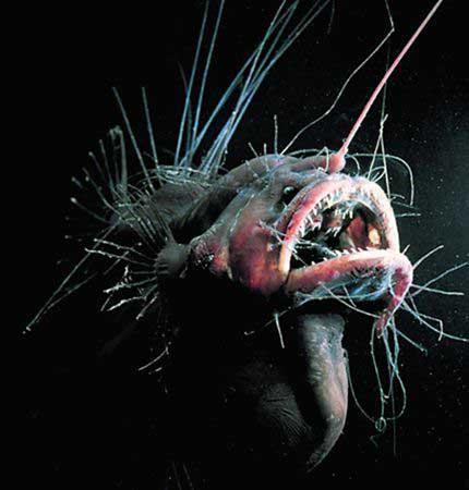 """揭秘深海世界凶猛""""怪物"""""""