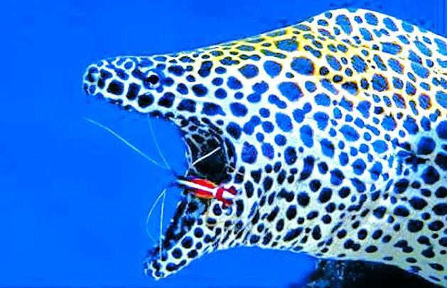 奇妙的海洋共生动物