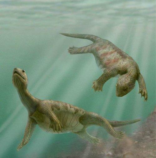 迷人的史前海洋生物