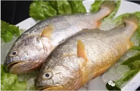 大黄鱼的这种做法你肯定不会