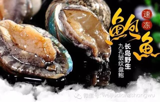 海产八珍之王-长岛皱纹盘鲍