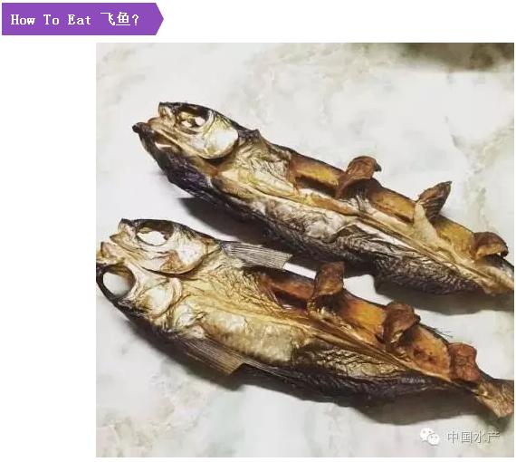 領略蘭嶼人特有的飛魚文化