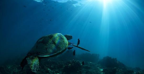 谢墨:如果有来生 我还是会把精力花在大海里