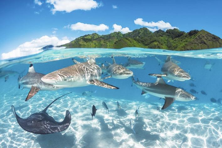 全球水下摄影大赛年度奖揭晓