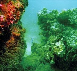 洞壁上生长旺盛的珊瑚<br>