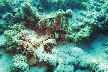 珊瑚礁海域<br>