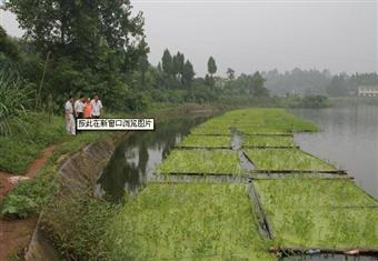 重庆潼南县农委领导检查鱼菜共生种养项目实施情况