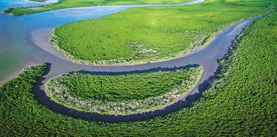 海口东寨港红树林保护区。